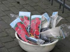 ČČK - zakoupení a výsadba růží u školy - 6.10.2017